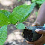Sac personnalisable et reforestation