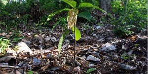 Des arbres plantés grace a l achat des sacs publicitaires